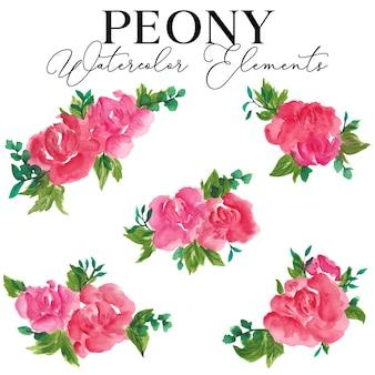 Peony flower aquarel elementen collectie