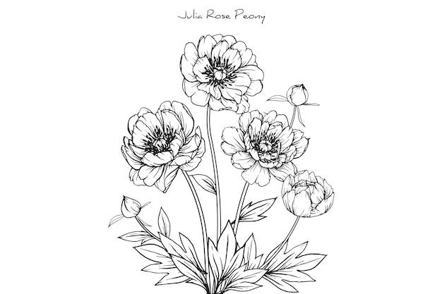 Peony julia rose blad- en bloemtekeningen. vintage hand getrokken botanische illustraties.