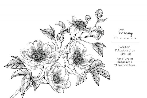 Peony leaf en bloemtekeningen Premium Vector