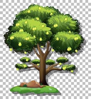 Perenboom op transparante achtergrond