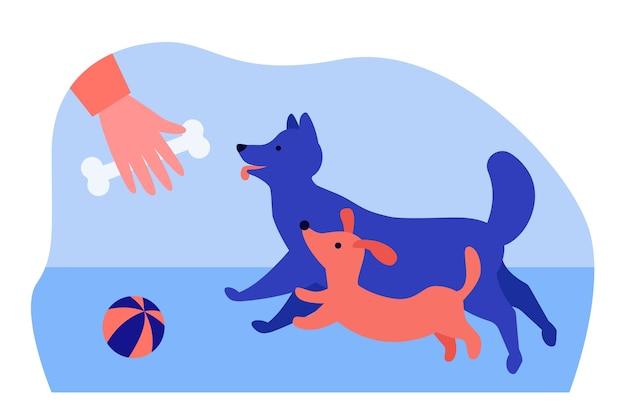 Persoon spelen en honden trainen buiten in plat ontwerp