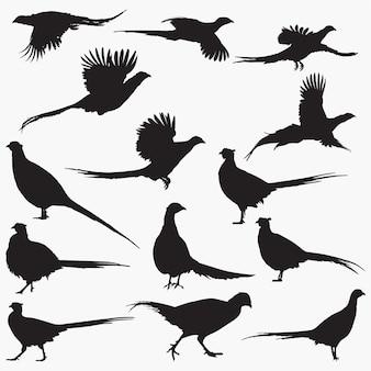 Pheasant silhouetten