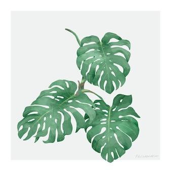 Philodendronblad op witte achtergrond wordt geïsoleerd die Gratis Vector