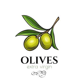 Pictogram van een hand getekende olijven