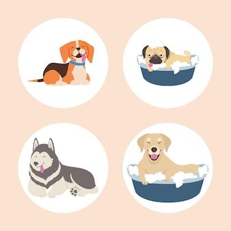 Pictogrammen met schattige honden
