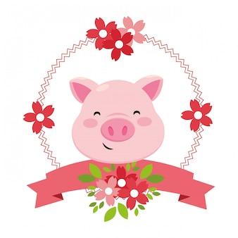 Pig alleen gezicht