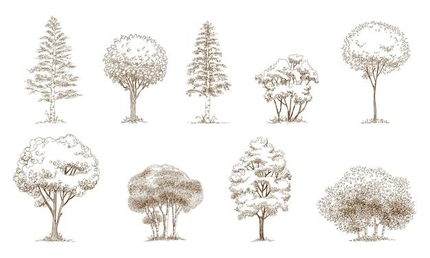 Pijnbomen kerstbomen realistische hand getrokken vector set, geïsoleerd over wit.