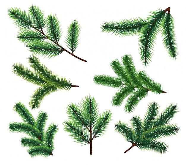 Pijnboomtakken. fir kerstboom tak. vector xmas decorarion elementen