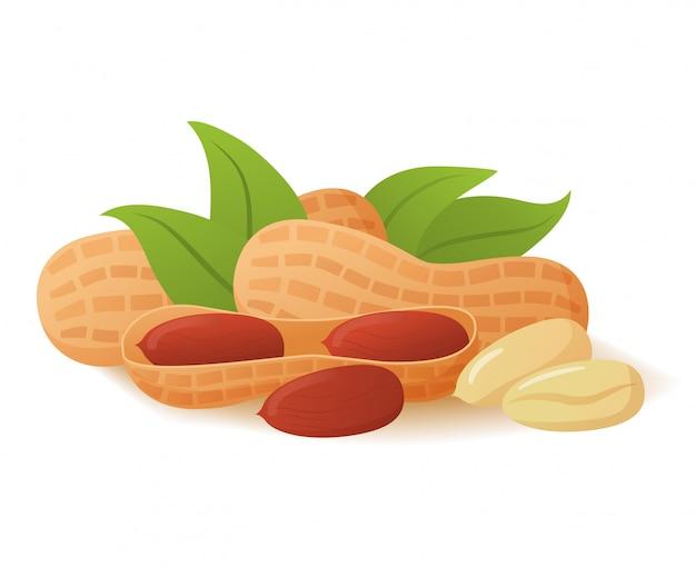 Pinda's in de schaal realistisch. voedsel concept.