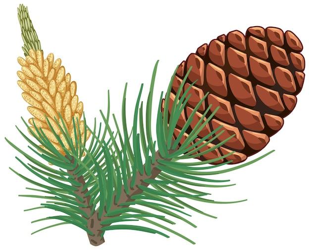 Pinecorn met dennennaalden geïsoleerd