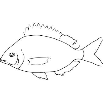 Pinfish hand geschetst hand getrokken vector clipart