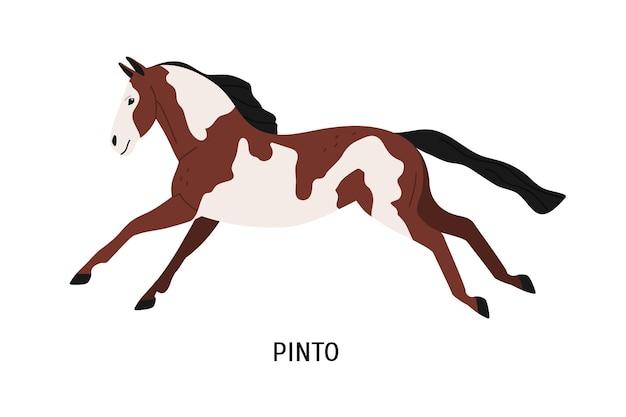 Pinto ras paard platte vectorillustratie. stamboom paarden, gevlekt, vlekkerig hoss. paardenfokkerij, paardrijden concept. mooi ros, hoefdier geïsoleerd op een witte achtergrond.