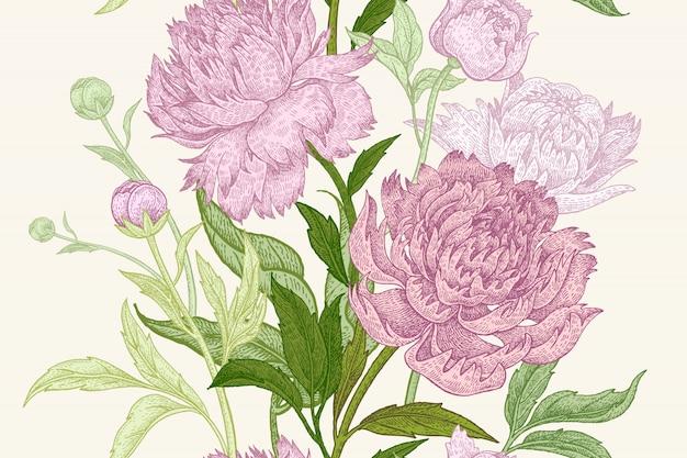 Pioen bloemen illustratie