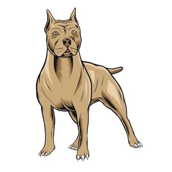 Pitbull illustratie