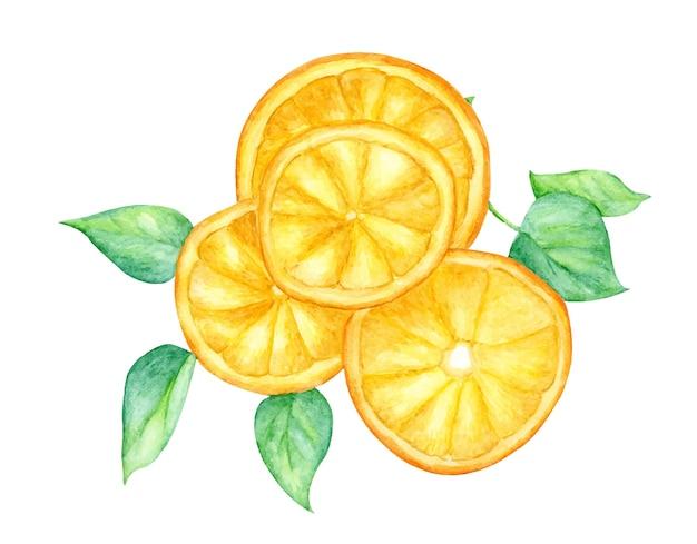 Plakje oranje fruit en groene bladeren