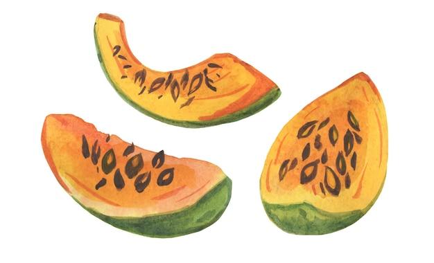Plakjes pompoen meloen aquarel illustratie groenten fruit