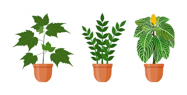 Plant in bloempot. set kamerplanten en bloemen in pot in vlakke stijl. vector illustratie.