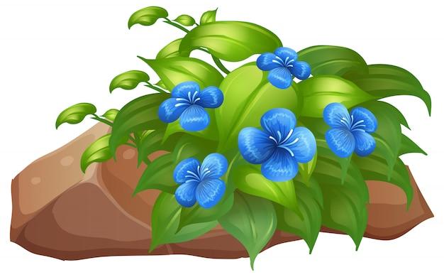 Plant met blauwe bloemen op wit