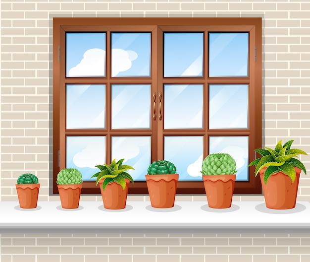 Plant potten bij het raam