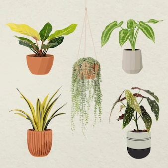 Plant vector kunst set, kamerplant in een bloempot