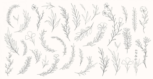 Plantaard hand getrokken set. collectie botanische element. elegante vintage stijl.