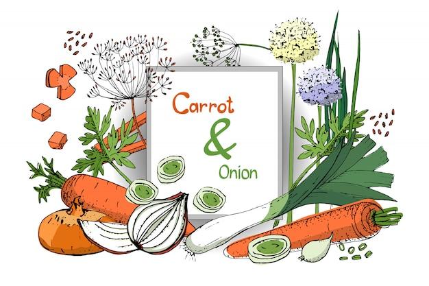 Plantaardige schets. set van ui en wortel. verse ui, bieslook, allium, eschalot, wortel.