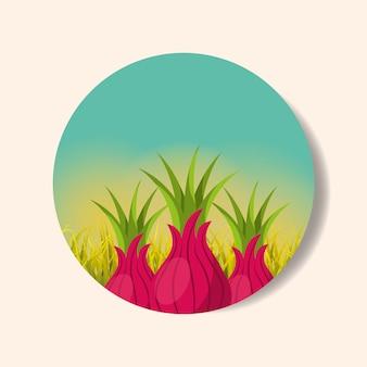 Plantage groente oogsten ui