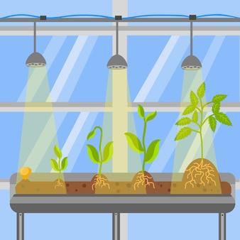 Planten in broeikas platte vectorillustratie