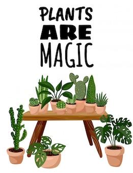 Planten zijn magische ansichtkaart. ingemaakte succulente planten in hygge interieur flyer
