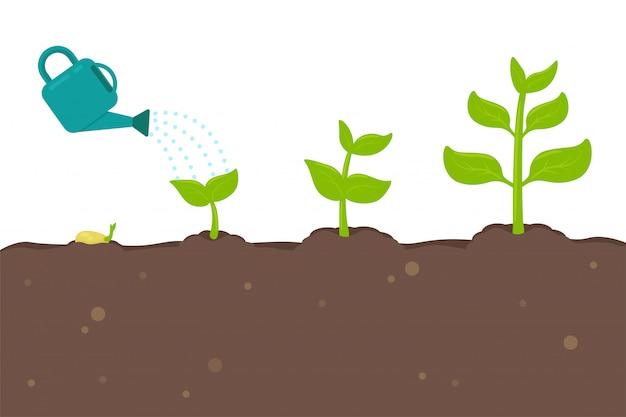 Plantengroei zaailingen die uit zaden groeien, veranderen in grote bomen.