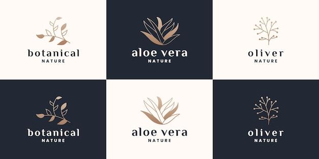Plantkunde, aloë vera, olijf logo-ontwerpset met gouden kleur