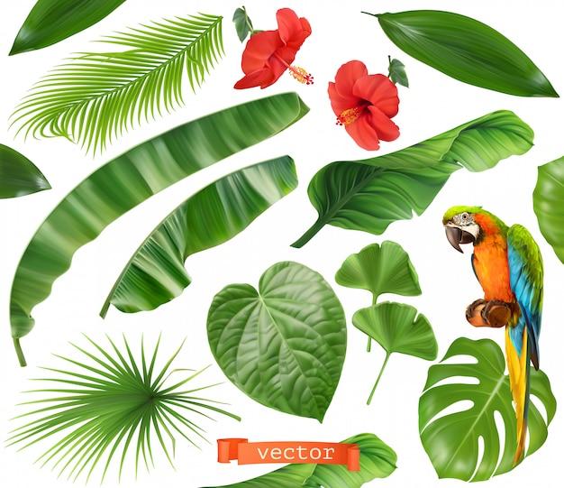 Plantkunde. set van bladeren en bloemen. tropische planten. 3d-realistische pictogrammen