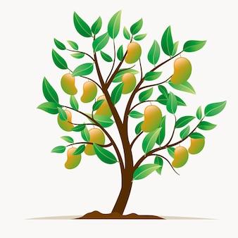 Plat botanische mangoboom illustratie