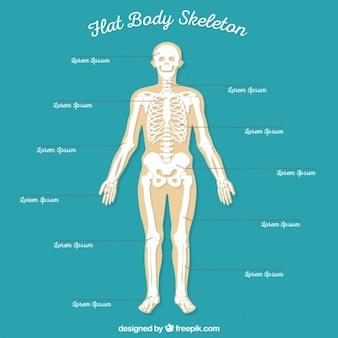 Platte body skelet