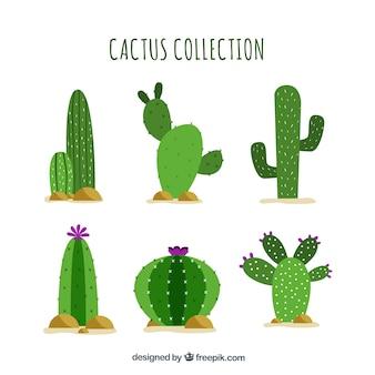 Platte cactus met grappige stijl