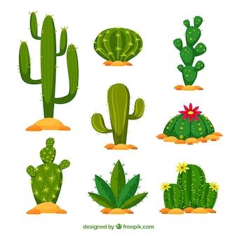 Platte cactuspakket met natuurstijl Premium Vector