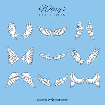 Platte collectie met verschillende soorten vleugels