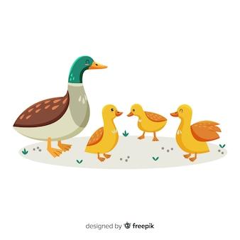 Platte moedereend en kuikens op gras