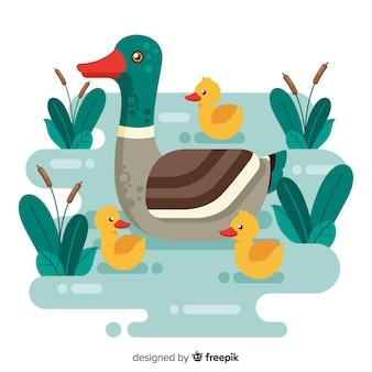 Platte moedereend en kuikens op water