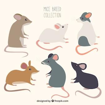 Platte muizenverpakking van zes