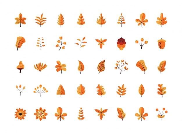 Platte ontwerp herfstbladeren en bloemen collectie pack