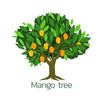 Platte ontwerp illustratie mangoboom