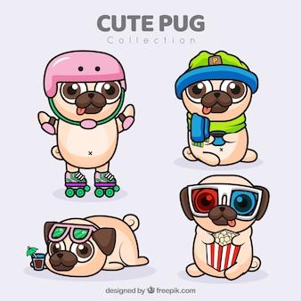 Platte verscheidenheid aan leuke pugs