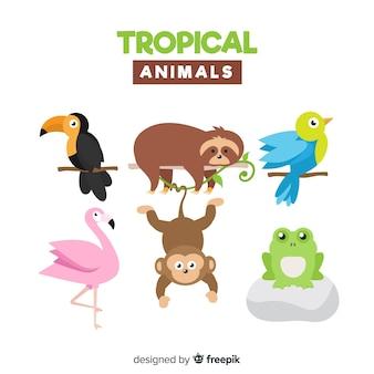 Platte verzameling van exotische dieren