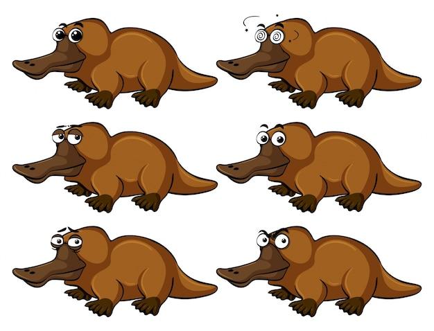 Platypus met verschillende gezichtsuitdrukkingen