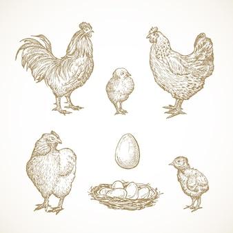 Pluimvee vogels schetsen set hand getrokken illustraties van haan kippen kuikens en eieren in een nest