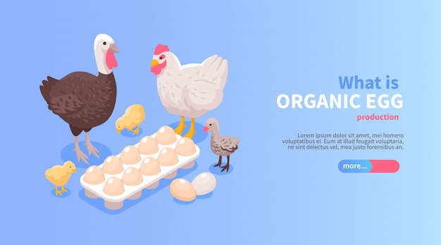 Pluimveebedrijf productie isometrische horizontale website banner ontwerp met biologische eieren kip kalkoen vlees aanbieding