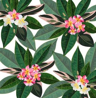 Plumeria bloemen