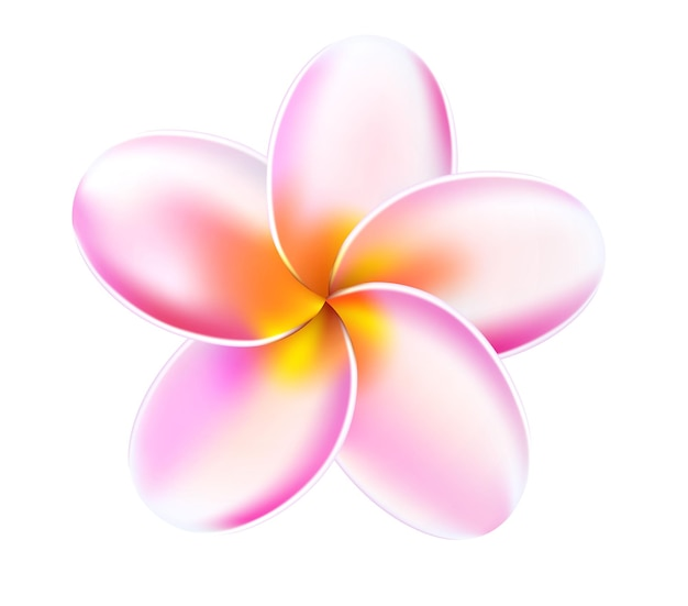 Plumeria tropische bloem illustratie