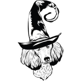 Poedelhond in heksenhoed voor halloween
